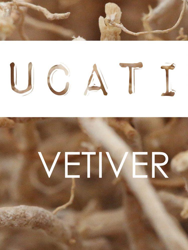 Blog_Vetiver Ingredient Knowledge Parfum